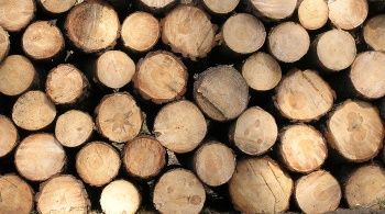 какие дрова лучше для котла